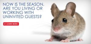 panel_season_mice