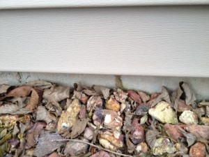 Termite shelter tube on foundation in Southington Ct