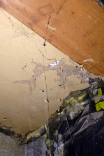 Termites Damage Ceiling Drywall : Termite evidence