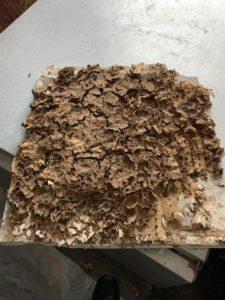 Termite control problems